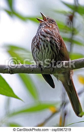 oiseaux - csp5967219