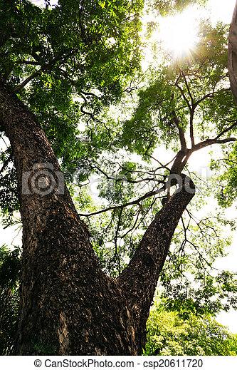 Ojo árbol Hormiga Tronco Vista Ramas Ojo Hormiga árbol