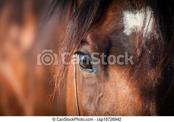 El primer plano de los caballos - csp18726942