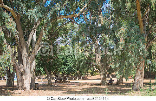 Old big green trees in the park. - csp32424114