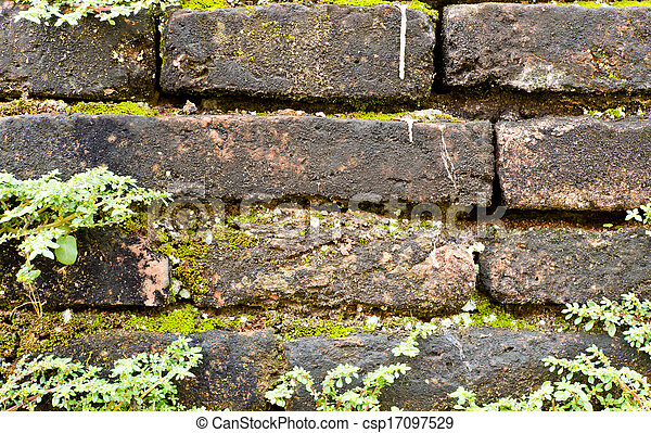 old brick wall with plant - csp17097529