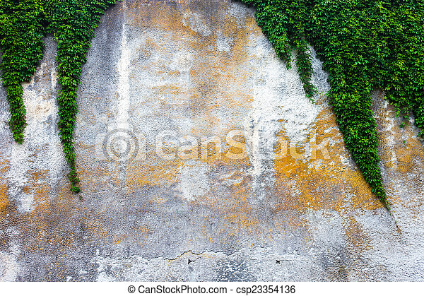 Old concrete wall with the green ivy - csp23354136