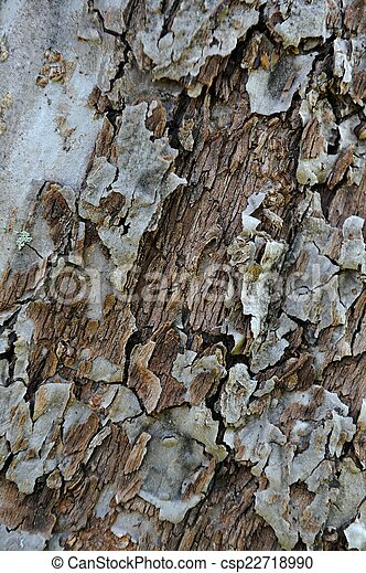 Old Cracked Tree Bark Texture  - csp22718990