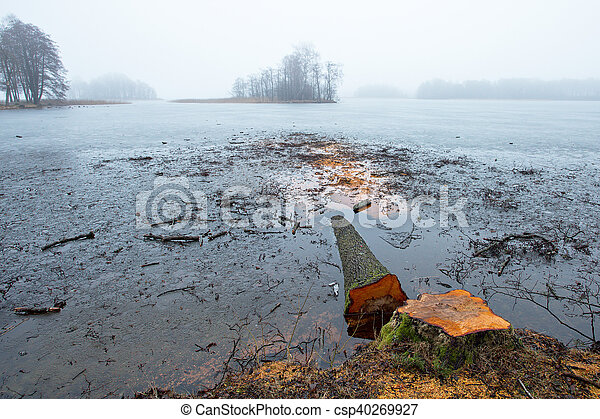 Old cutting trees on the lake - csp40269927