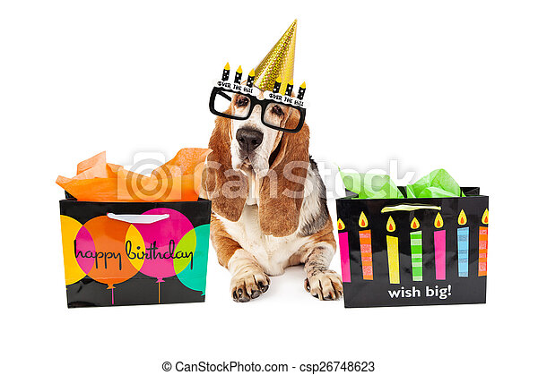 Old Dog Birthday Party With Presents