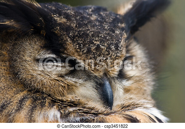 Old eagle owl watchful - csp3451822