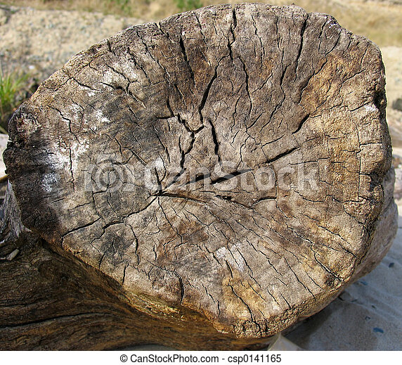 old log butt end of old log
