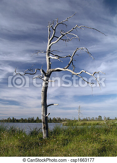 Old lonely tree  - csp1663177