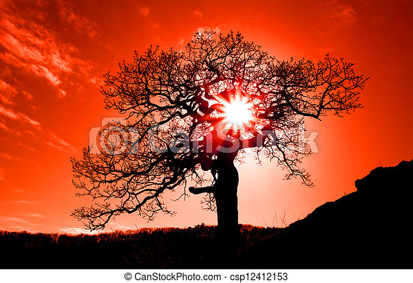 Old oak in sunset with sun - csp12412153