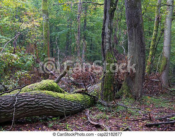 Old oak tree broken - csp22182877