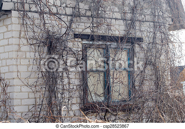 old overgrown house in the country - csp28523867