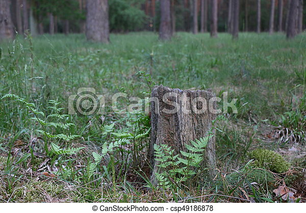 Old pine stump with green moss - csp49186878