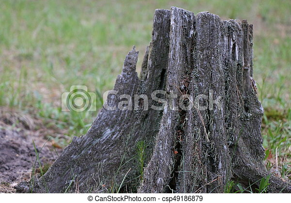 Old pine stump with green moss - csp49186879