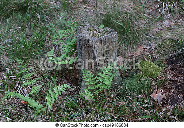 Old pine stump with green moss - csp49186884