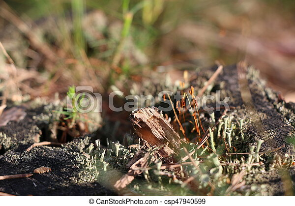 Old pine stump with green moss - csp47940599