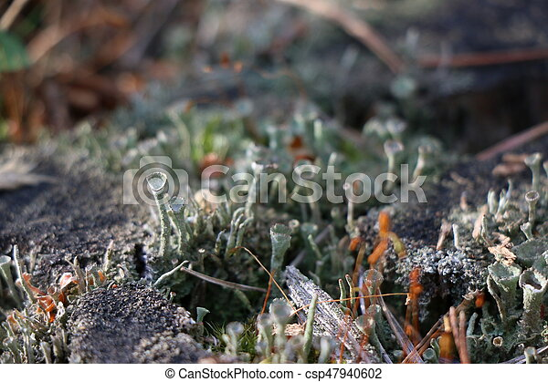Old pine stump with green moss - csp47940602