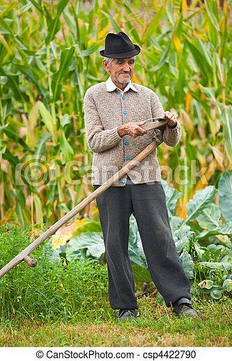 Old rural man using scythe - csp4422790
