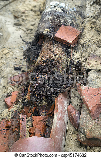 Old Sewer Pipe Line Completely Full of Invasive Tree Roots Closeup - csp45174632