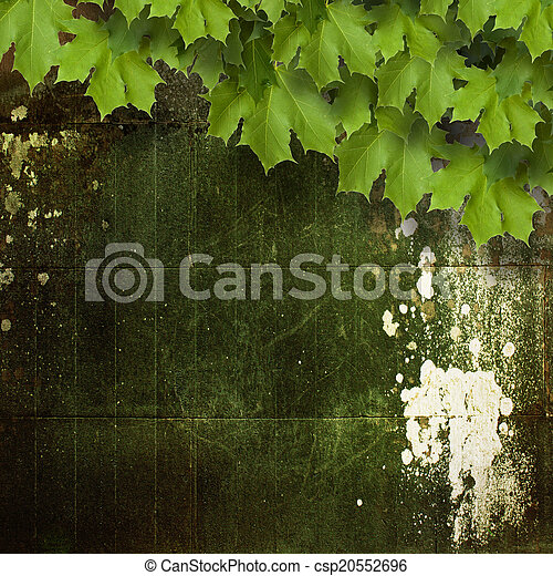 Old shabby cement wall with green branches of the maple - csp20552696