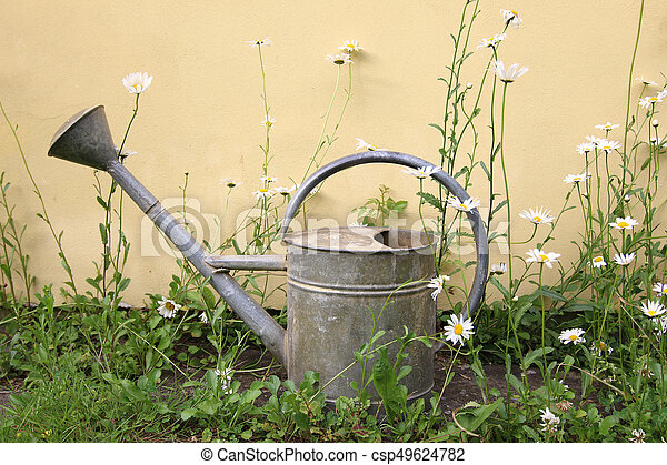 Old sprinkling can between daisies - csp49624782