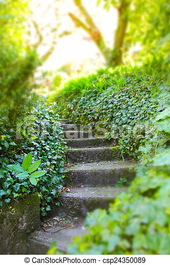 Old stone stairs with ivy - csp24350089