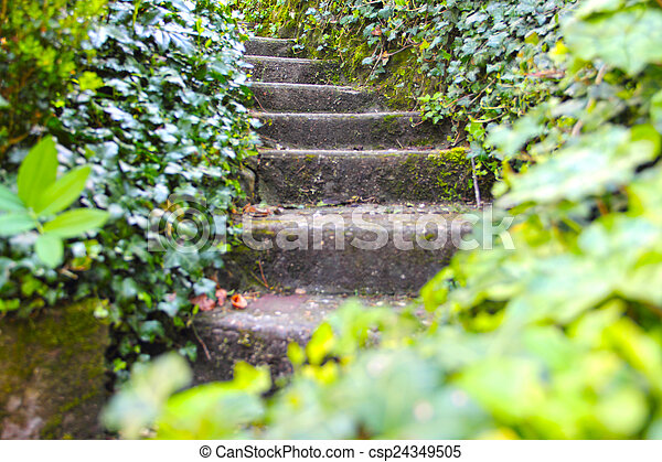 Old stone stairs with ivy - csp24349505