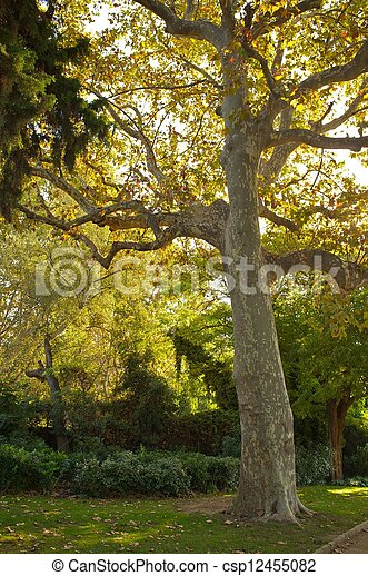 Old tree in a park. - csp12455082