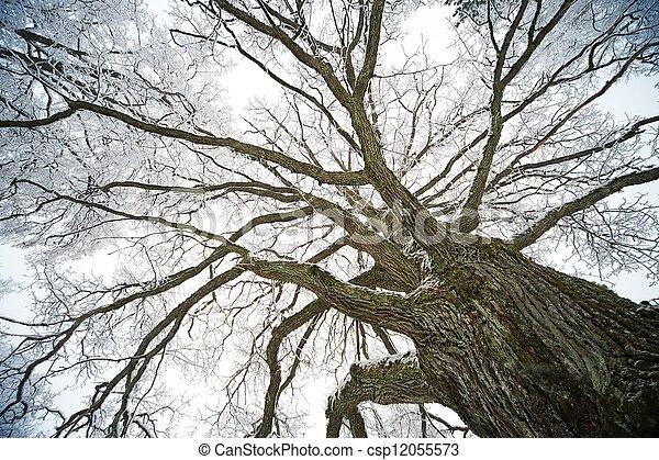 Old tree - csp12055573