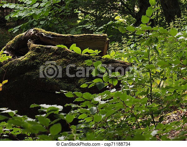 Old tree trunk with moss - csp71188734