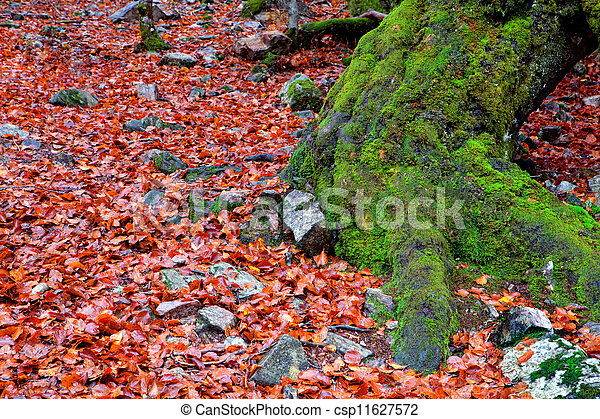 Old tree trunk with moss surrounded - csp11627572