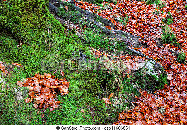 Old tree trunk with moss surrounded - csp11606851