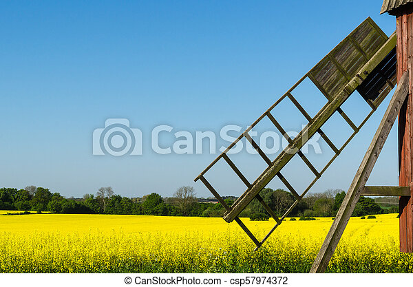 Old windmill by a blossom rapeseed field - csp57974372
