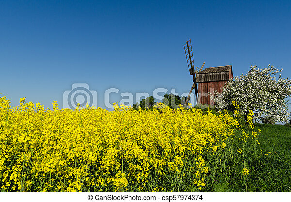 Old windmill by blossom rapeseed field and apple tree - csp57974374