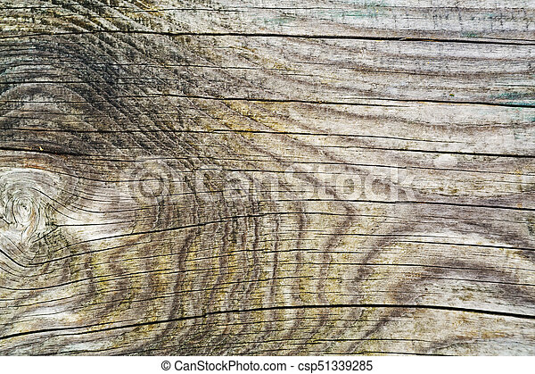 Old wood skin wood texture wood  Natural wood background natural