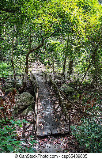 Old wooden bridge in jungle, Chiang Mai, Thailand - csp65439805