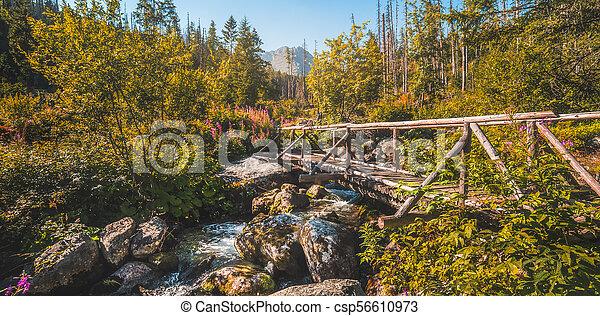 Old Wooden Bridge over Creek - csp56610973