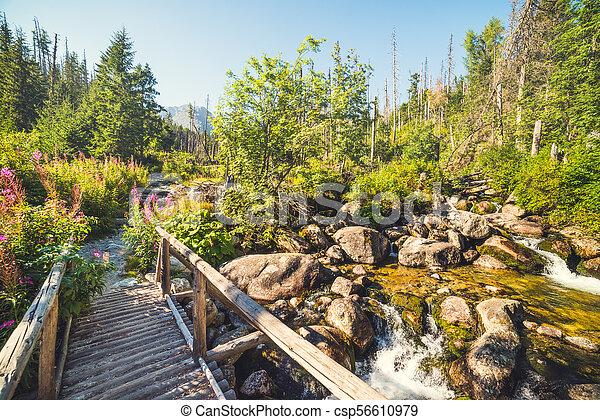 Old Wooden Bridge over Creek - csp56610979