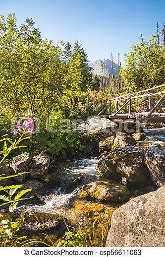 Old Wooden Bridge over Creek - csp56611063