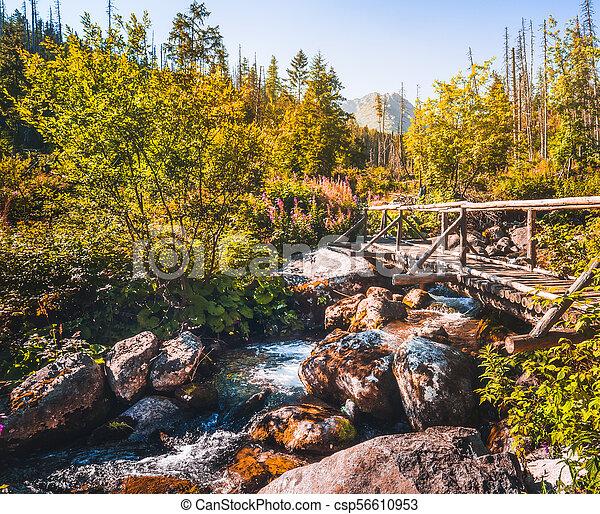 Old Wooden Bridge over Creek - csp56610953