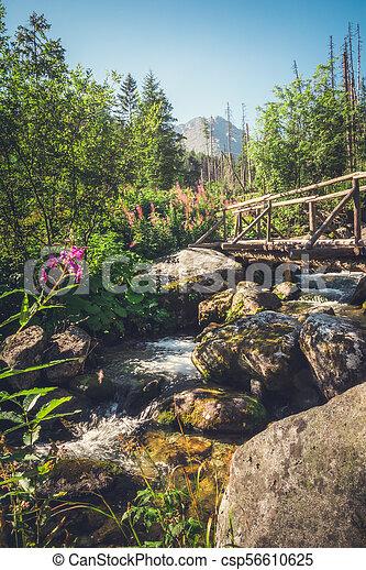 Old Wooden Bridge over Creek - csp56610625