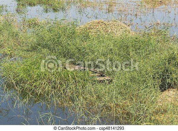 Old wooden rowing boat in grass reeds - csp48141293