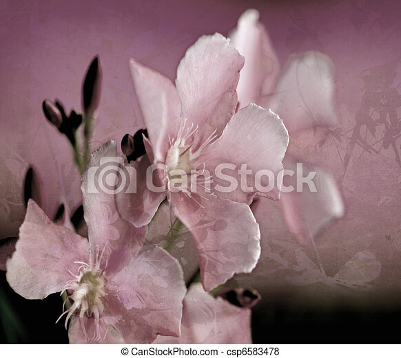 Oleander Art Fleur Peinture Numerique Fleur Art Oleander