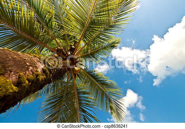 olhar, árvore, palma cima - csp8636241