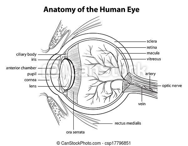 olho, human - csp17796851