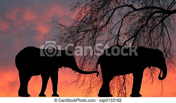olifanten - csp0133162