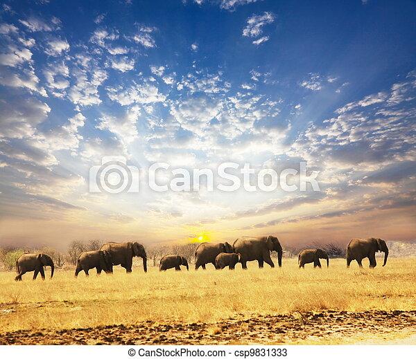 olifanten - csp9831333