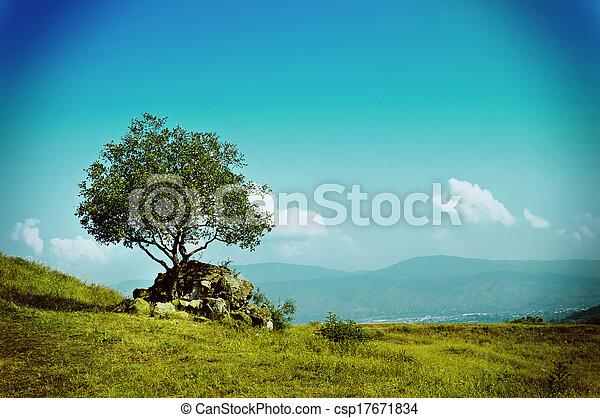 oliva, singolo, albero - csp17671834