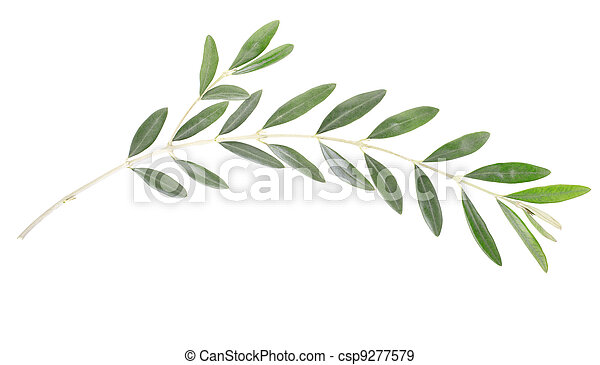 Olive Branch Peace Symbol Olive Branch And Leaves Isolated On White