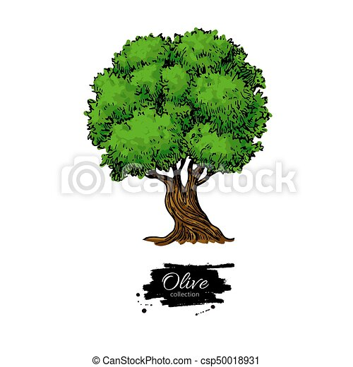 Olive tree hand drawn vector illustration vintage botanical olive tree hand drawn vector illustration vintage botanical drawing artistic style isolated object great for label logo icon poster thecheapjerseys Gallery