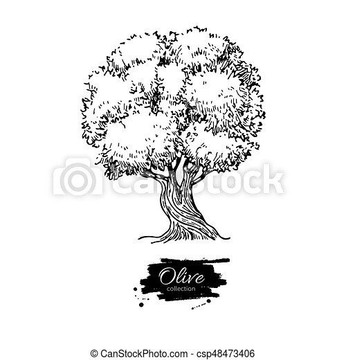 Olive tree hand drawn vector illustration vintage botanical olive tree hand drawn vector illustration vintage botanical drawing old style engraved isolated object great for label logo icon poster altavistaventures Gallery